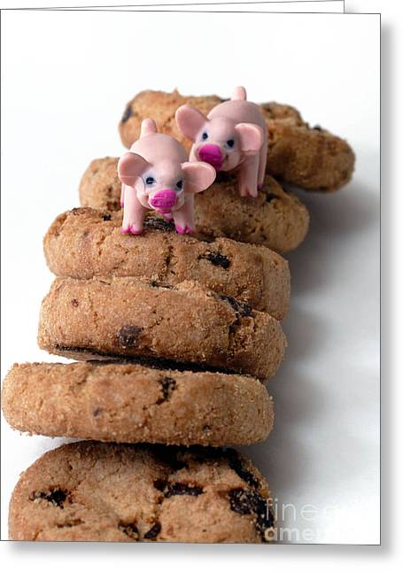 Fat Pigs 2 Greeting Card by Amy Cicconi
