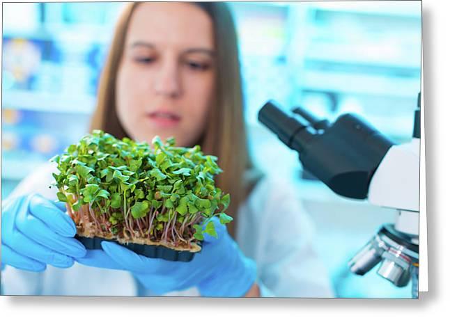 Female Biologist Holding Seedlings Greeting Card by Wladimir Bulgar/science Photo Library