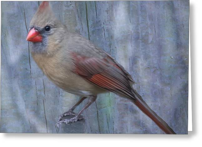Female Cardinal Greeting Card by John Kunze