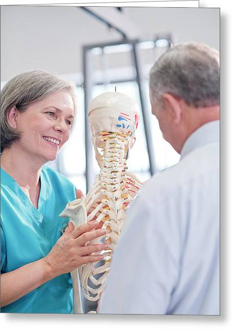 Female Chiropractor Showing Anatomical Model Greeting Card by Science Photo Library