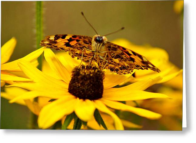 Female Gulf Fritillary  Greeting Card by Carol Toepke