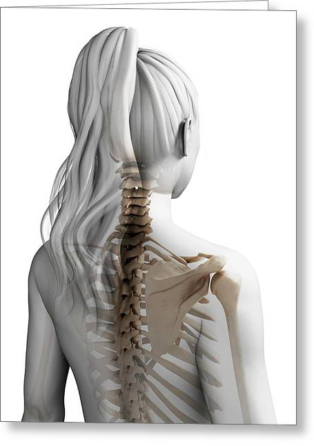 Female Spine Greeting Card