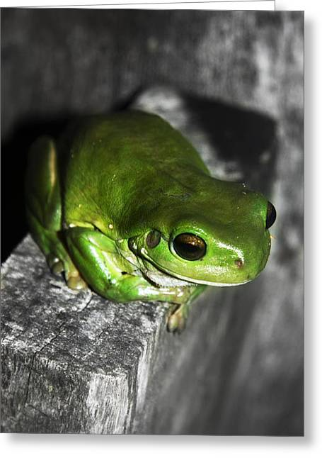 Fence Frog Greeting Card
