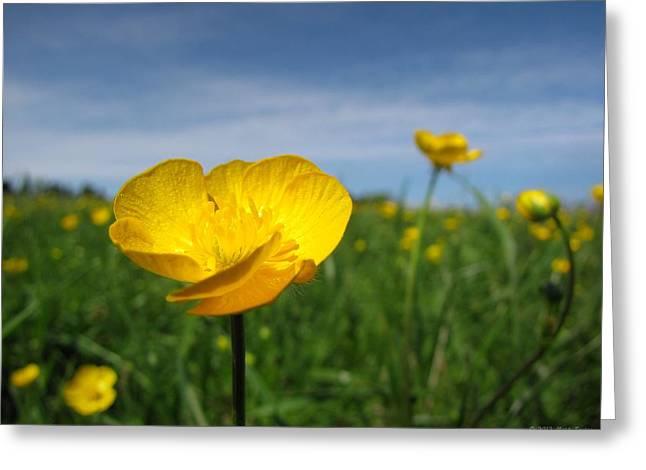 Field Of Buttercups Greeting Card by Matt Taylor
