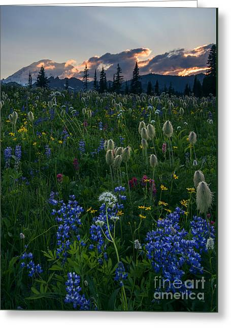 Fields Of Paradise Greeting Card