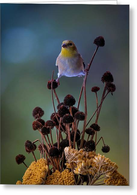 Finch Greeting Card by Bruce Brooks