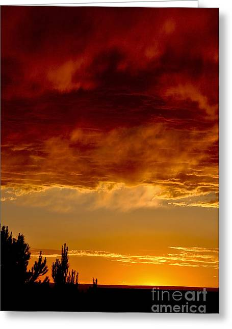 Fire In The Sky Greeting Card by Gina Savage