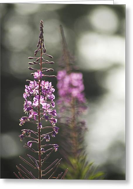 Greeting Card featuring the photograph Fireweed by Yulia Kazansky