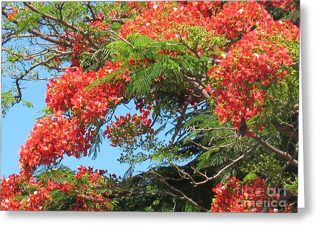 Flamboyants - Ile De La Reunion - Reunion Island Greeting Card by Francoise Leandre