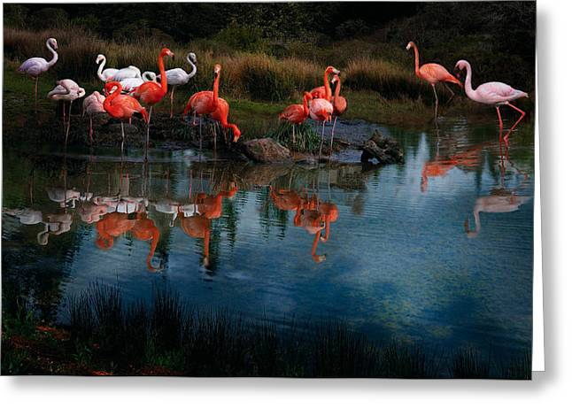 Flamingo Convention Greeting Card