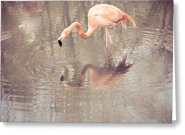 Flamingo Greeting Card by Hannes Cmarits