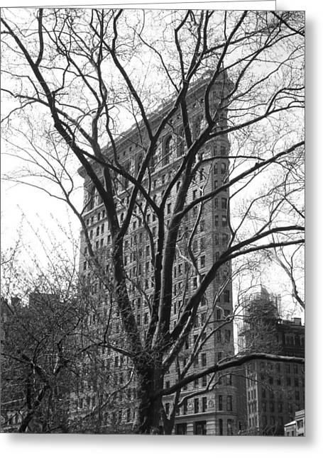 Flat Iron Tree Greeting Card