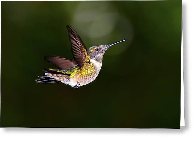 Flight Of A Hummingbird Greeting Card