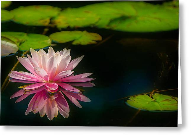 Floating Greeting Card by Ken Beatty