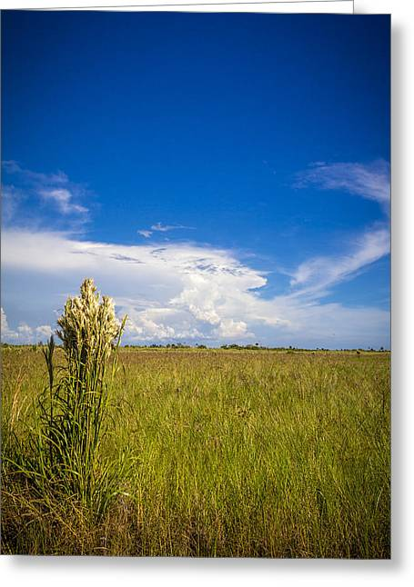 Florida Flat Land Greeting Card