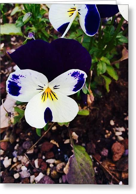 Flower Greeting Card by Niki Mastromonaco