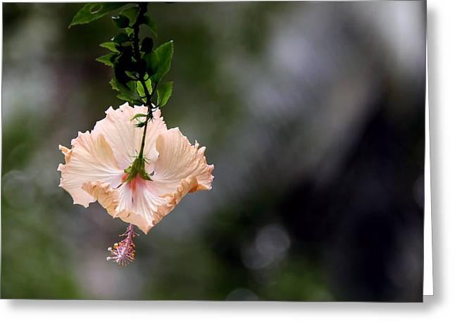 Flower Greeting Card by Sanjeewa Marasinghe