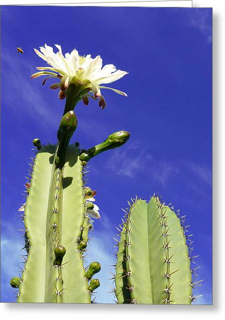 Flowering Cactus 2 Greeting Card