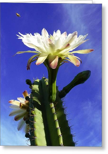 Flowering Cactus 3 Greeting Card