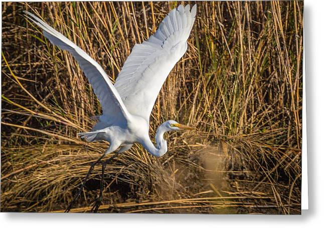 Flying White Egret Greeting Card