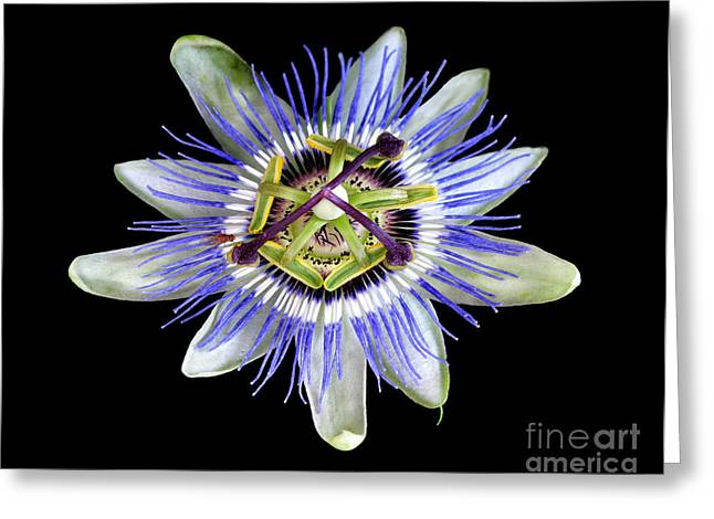 Greeting Card featuring the photograph Fly's Passion by Jennie Breeze