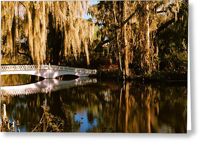 Footbridge Over Swamp, Magnolia Greeting Card by Panoramic Images