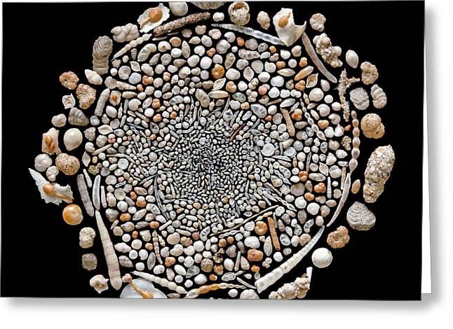 Foraminifera From Challenger Expedition Greeting Card