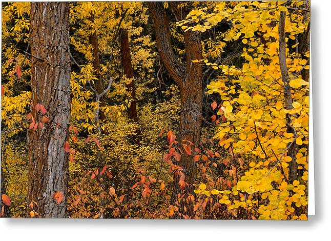 Forest Color Greeting Card by Leland D Howard