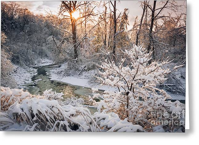 Forest Creek After Winter Storm Greeting Card