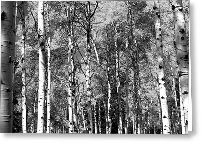 Forest, Grand Teton National Park Greeting Card by Panoramic Images