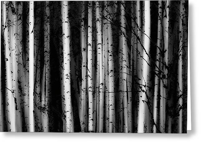 Forest Of Birch Trees  Alberta, Canada Greeting Card