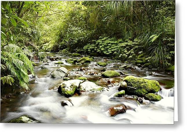 Forest Stream Greeting Card by Les Cunliffe
