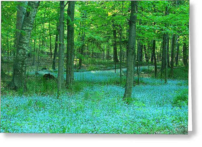 Forget-me-nots In Peninsula State Park Greeting Card by David T Wilkinson