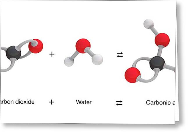 Formation Of Carbonic Acid Greeting Card