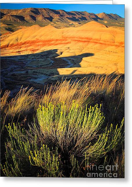 Fossil Beds And Grass Greeting Card by Inge Johnsson