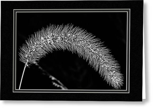 Foxtail Grass Greeting Card