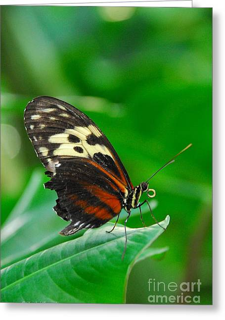 D5l15 Butterfly At Franklin Park Conservatory Greeting Card