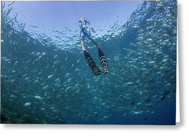 Free Diver In School Of Fish Greeting Card by Scubazoo