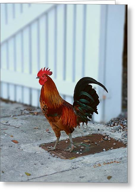 Greeting Card featuring the photograph Free Range Cock by R B Harper