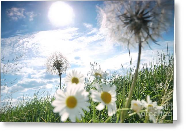 Fresh Meadow Background Greeting Card by Michal Bednarek