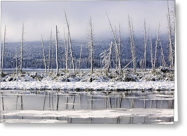 Fresh Snowfall And Bare Trees Greeting Card by Ken Gillespie