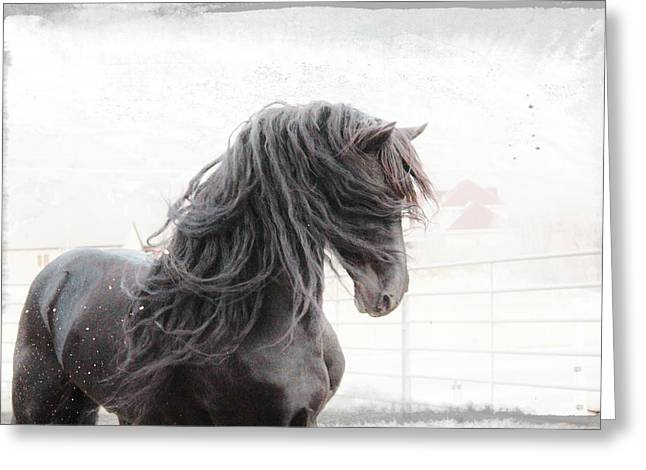 Friesian Magic Greeting Card