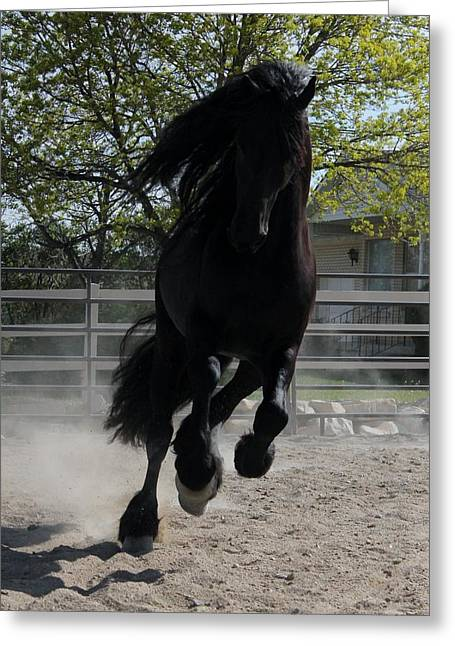 Friesian Spirit Greeting Card