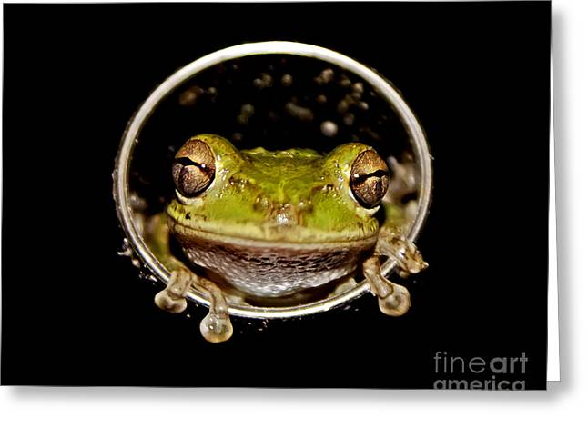 Greeting Card featuring the photograph Frog by Olga Hamilton