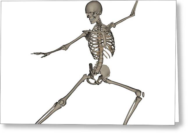Front View Of Human Skeleton Greeting Card by Elena Duvernay