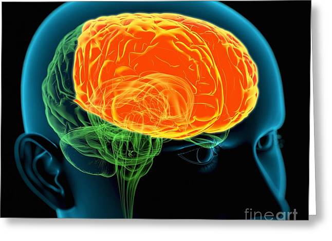 Frontal Lobes In The Brain, Artwork Greeting Card