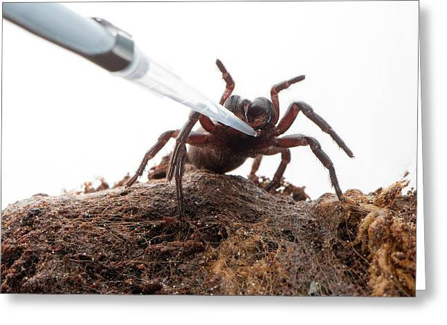 Funnel Web Spider Greeting Card by Louise Murray