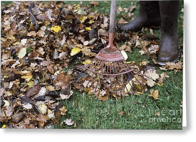 Gardener Raking Leaves Greeting Card