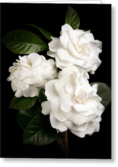 Gardenia Greeting Card by Brad Grove