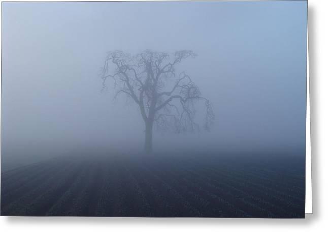 Garry Oak In Fog  Greeting Card